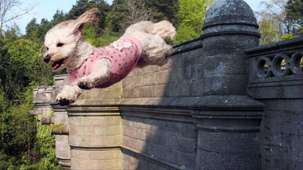 Hundarnas självmordsbro